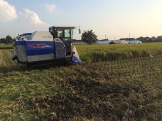 新米の収穫が始まりました