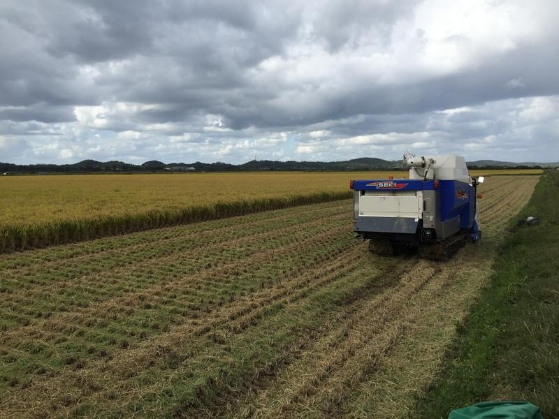 今年度の稲刈りは終了