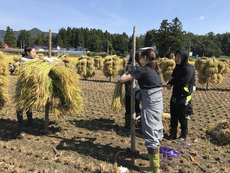 天日干し 稲刈り始まりました