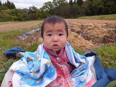 台風直撃!稲刈中断です。