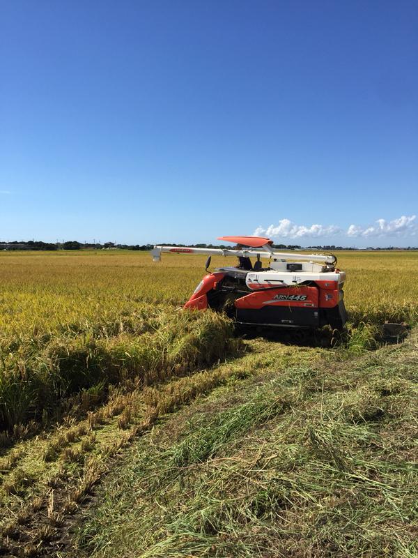 稲刈りが始まりました。