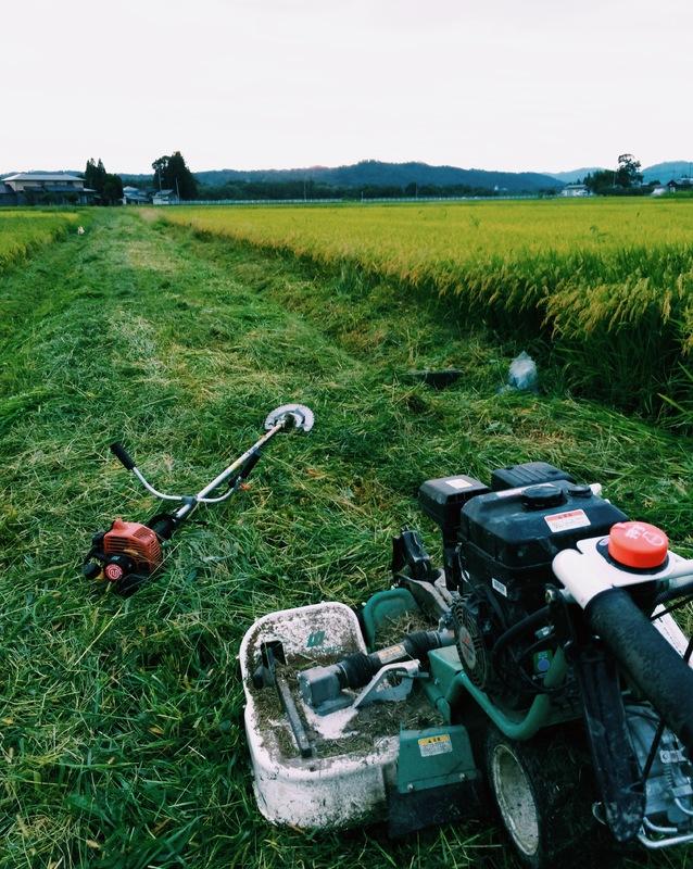 収穫前の草刈り