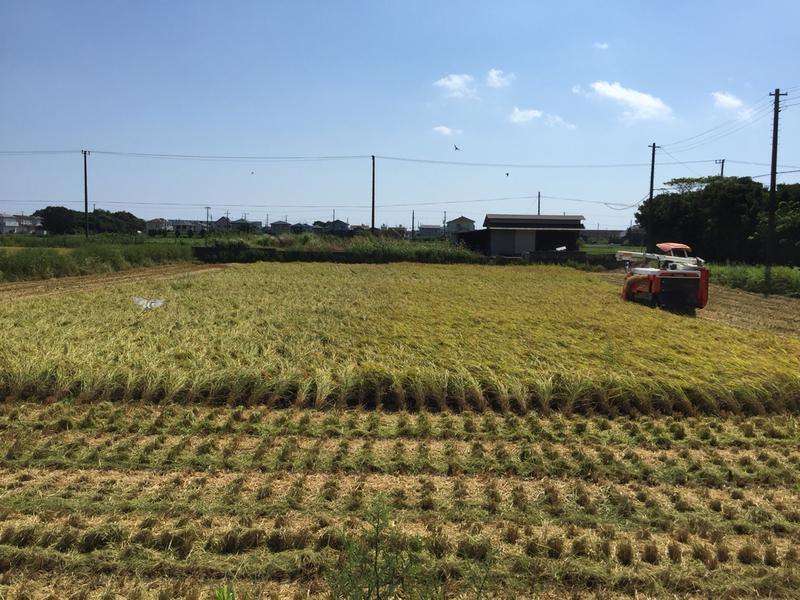 平成30年産米の稲刈り終了しました。