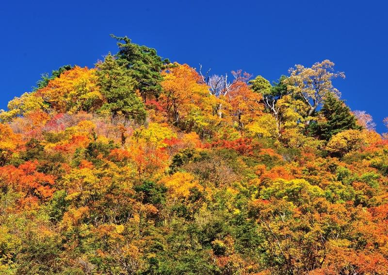 秋色に染まる飯豊