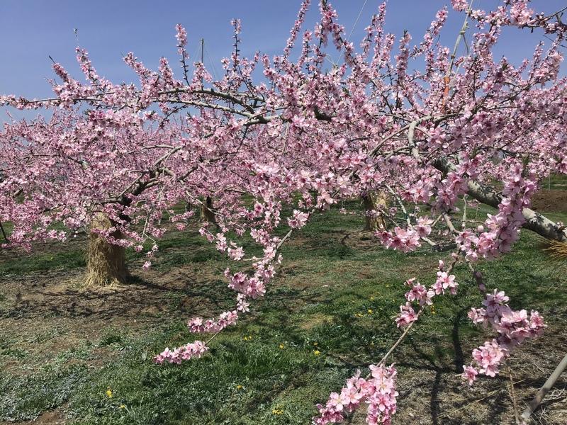 信州の実りを予感する春