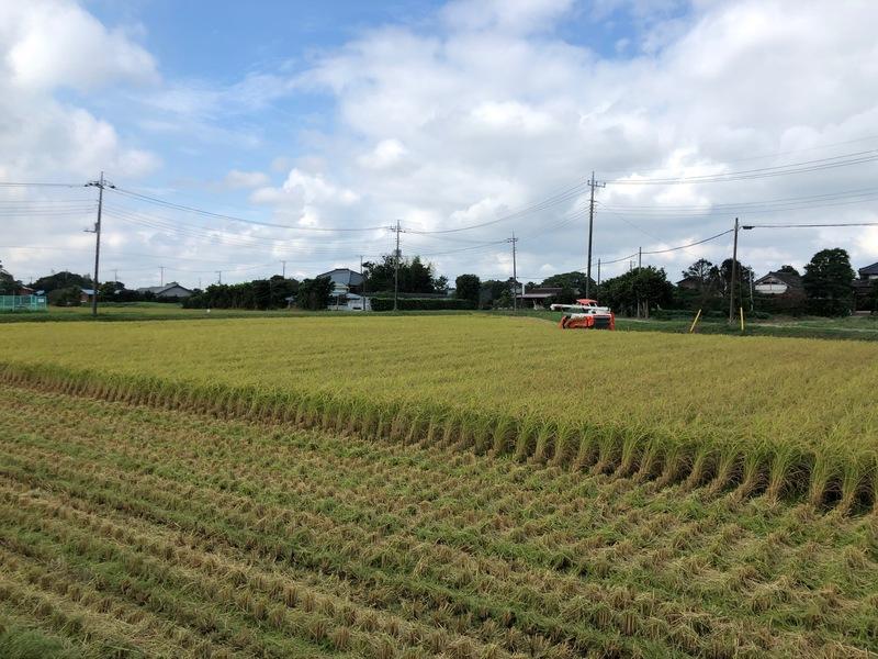 令和元年(2019年)産米の稲刈り終了しました。