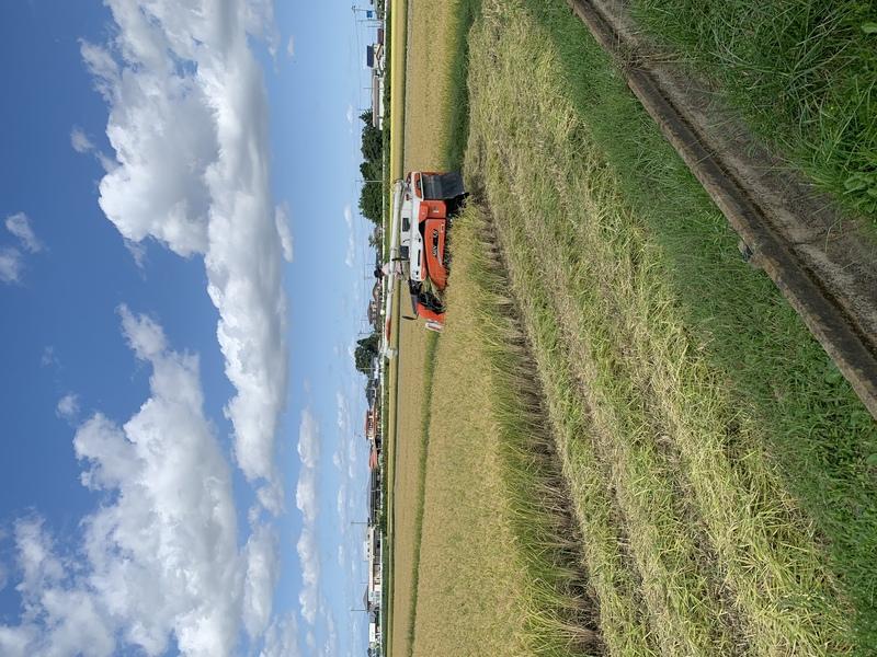 稲刈り始まりました。