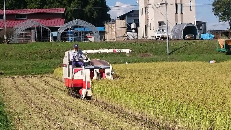 稲刈り終盤