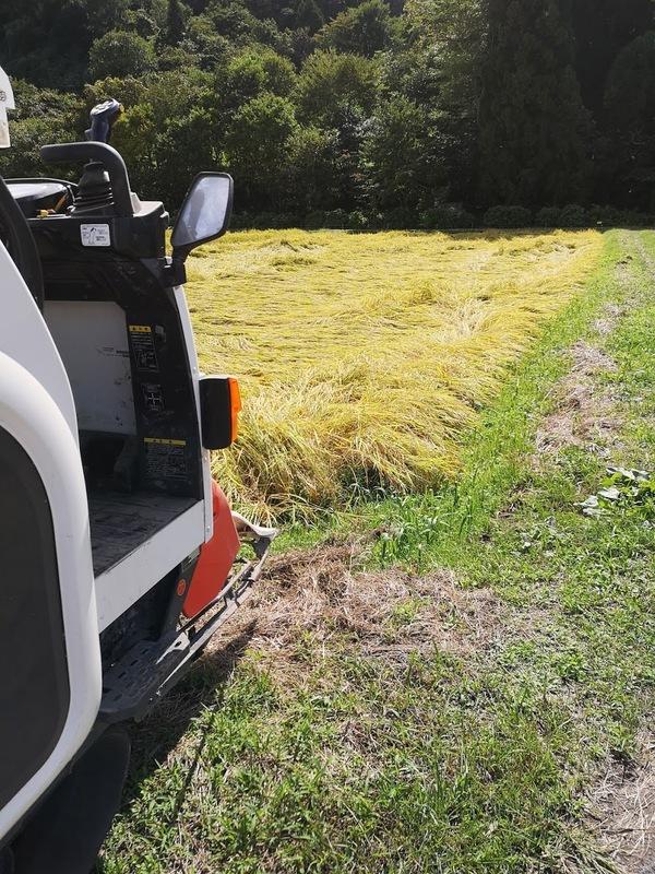 稲刈り始めました
