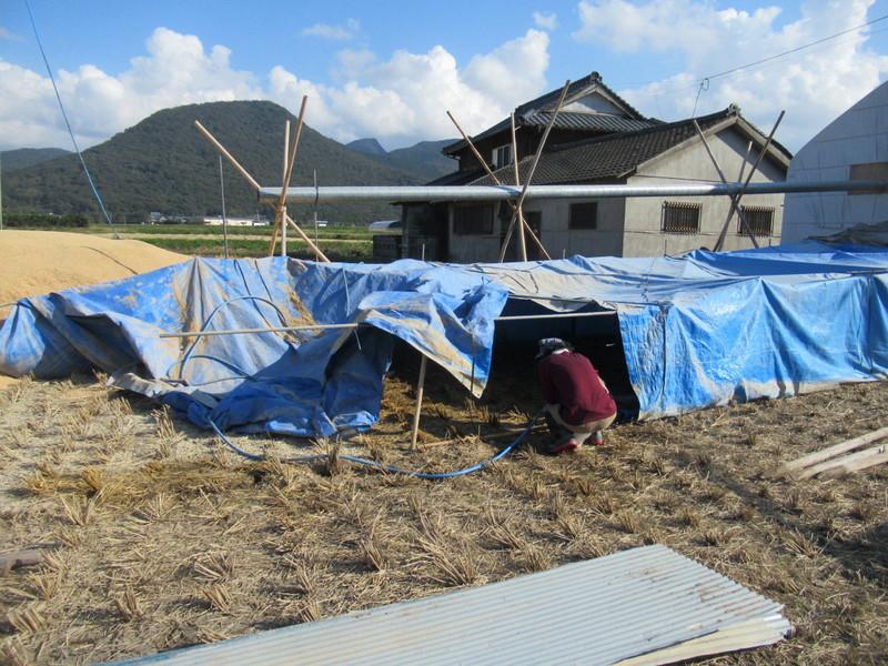 やっと稲刈りが終わりました。