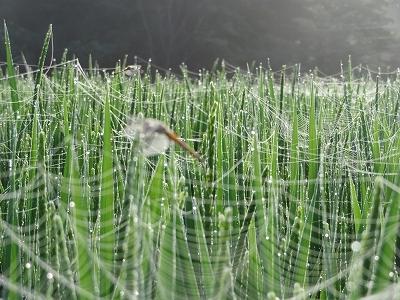 蜘蛛の巣バリアー!