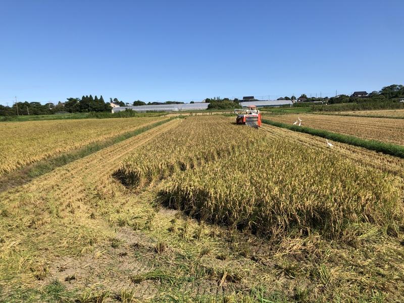 稲刈りを始めました。