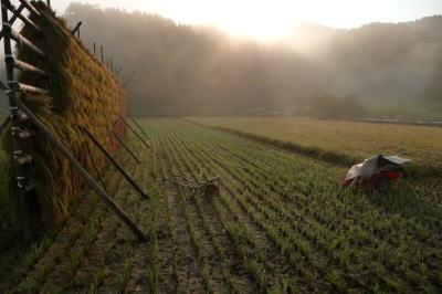 天日干しもち米が完売致しました。