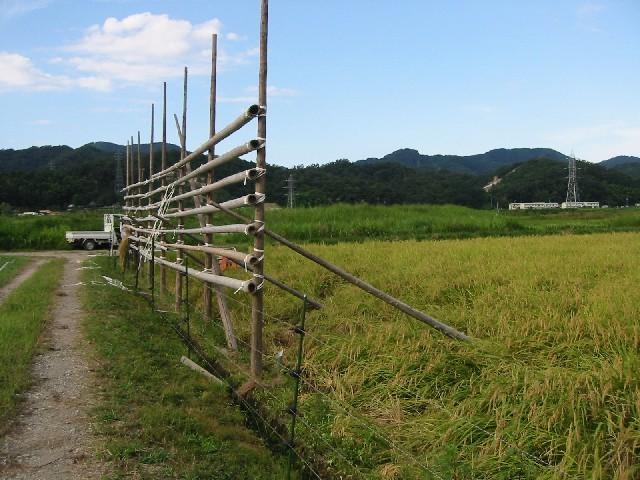 稲刈が終わりました。