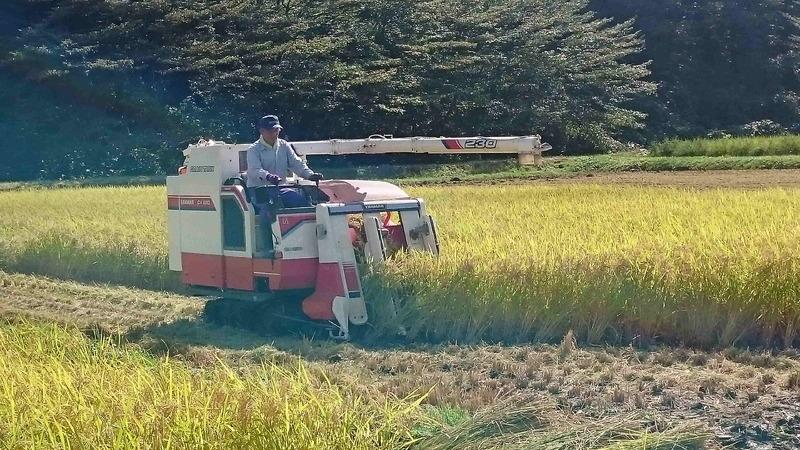 ようやく稲刈り開始